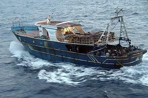 Pesca, servono misure per spada in Mediterraneo