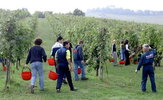 Scuola, Coldiretti: record +12% ad agraria. Crolla ragioneria (-4%)