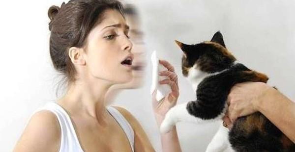 Boom allergie agli animali domestici. Gatto piu' pericoloso