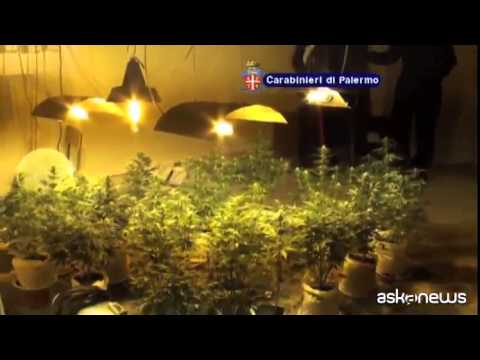 Palermo, ex convento trasformato in serra per marijuana