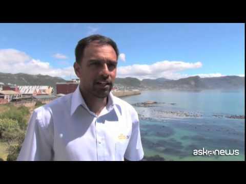 Sudafrica: barriera high-tech contro gli squali per i surfisti