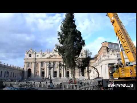 Arrivato in Piazza San Pietro l'albero di natale dalla Calabria