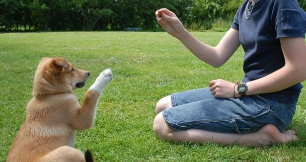 I cani ci capiscono, elaborano linguaggio come gli umani