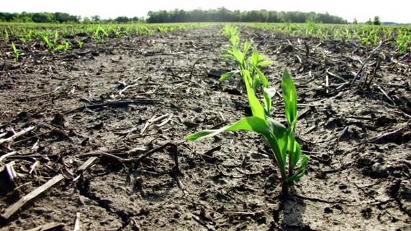 Agricoltura, allarme per fitopatie con danni da 500 mln