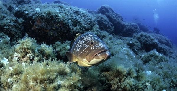 Ecosistemi marini sconvolti da inquinamento e riscaldamento