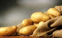 Rivoluzione olandese: la patata coltivata con l'acqua di mare (VIDEO)