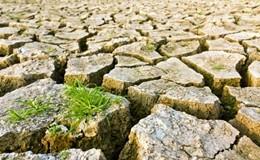 Surriscaldamento globale: 1 specie su 6 rischia l'estinzione