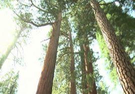 Caldo e siccità, a rischio le bellezze naturale di Yosemite Park (VIDEO)