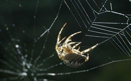 Scienza, una seta di ragno artificiale per molteplici usi