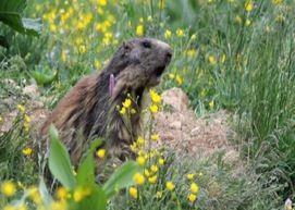 #AllarmeNatura, il grido d'allarme degli animali in pericolo