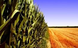 Raddoppiare le produzioni agricole dimezzando le risorse