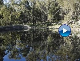 La biodiversità è nata in un laghetto di Palermo tra i boschi