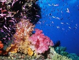 Denuncia Wwf: 114 siti Unesco minacciati da attività economiche