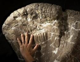 """Scoperto Tito, dinosauro """"italiano"""" di 112 milioni di anni fa"""