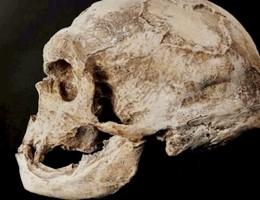 Scoperto alle isole Andamane un nuovo antenato dell'uomo