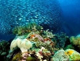 Cnr, ecco come cambiano gli eco sistemi marini