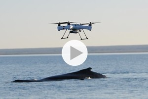 Ora arrivano i droni nella ricerca sulle balene