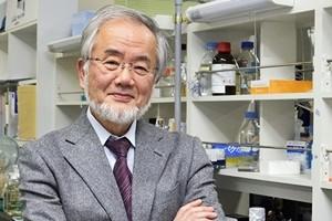 Nobel, premio per Medicina al giapponese Oshumi per autofagia