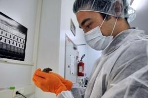 Sperimentato in laboratorio l'elisir di giovinezza. Ma al momento solo per i topi