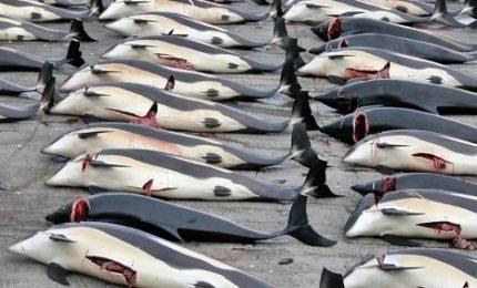 La mattanza continua: 333 balene uccise dalla flotta giapponese