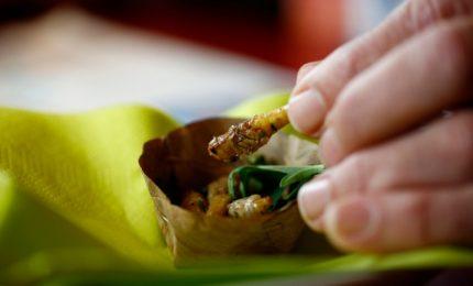 Vermi, grilli e formiche: il nuovo trend del food in Australia