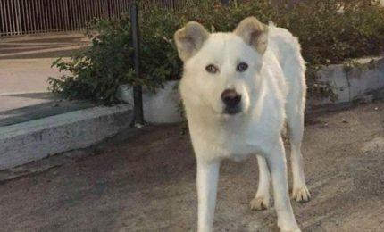 Seviziato e impiccato il cane Angelo, processo al via per i 4 giovani aguzzini