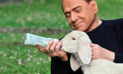 """Berlusconi salva cinque agnelli pasquali, adottati ad Arcore. Brambilla: """"Va scelta la vita"""""""