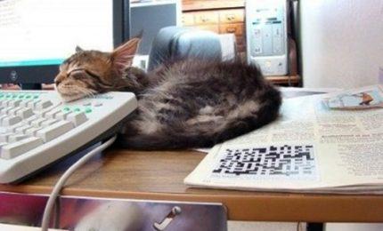 Portate il gatto in ufficio, allevia lo stress e rende produttivi