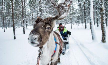 Nel cuore dell'Artico russo dove la vita dipende dalla renna