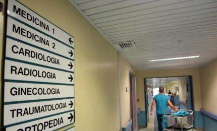 Napoli, formiche in letto ospedale. Procura avvia inchiesta
