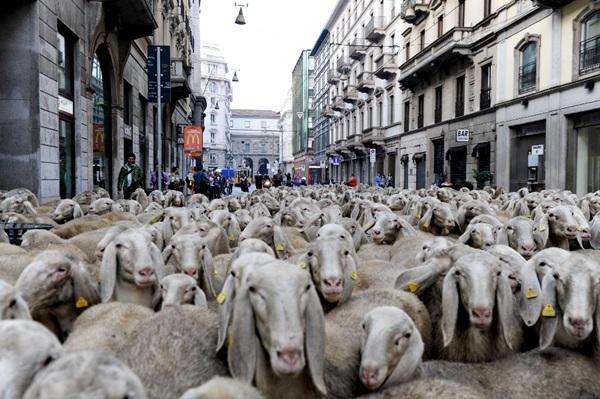 Panico a Torino, secondo uno studio del Cnr l'effetto gregge esiste