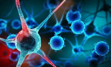 Bloccare la crescita dei tumori, la scoperta dell'Istituto Telethon di Napoli