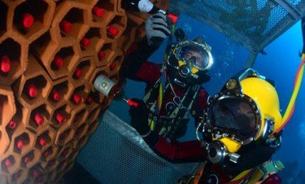 Conservare il vino negli abissi marini: l'esperimento col Bandol