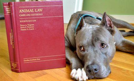 Arriva il codice di diritto animale