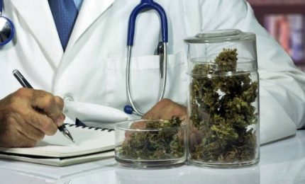 Cannabis, solo uso terapeutico