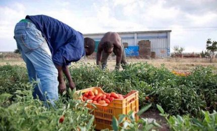 Morte 12 immigrati nel Foggiano, indagati 3 operatori agricoli