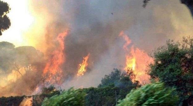 Incendio nella pineta a Ostia: Virginia Raggi, 'è disastro ambientale'