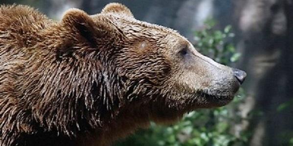 Villavallelonga: orso entra in casa mentre famiglia dorme