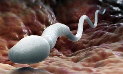Crollati spermatozoi nel liquido seminale degli uomini occidentali