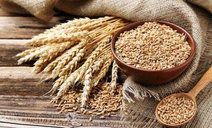 Celiachia, startup italiana promette libertà dal glutine. Da New Gluten World metodo per detossificazione delle proteine