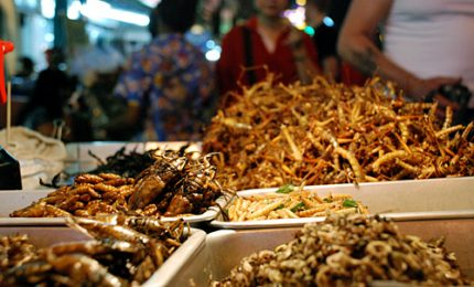Insetti prelibati, in Thailandia diventano cibo di lusso