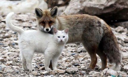 Incontro tra gatto e volpe, ma Pinocchio non c'entra