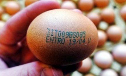 Sequestrate altre migliaia di uova in provincia di Viterbo e Ancona