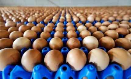 Uova contaminate, allarme Campania e Marche: campioni positivi, blocco vendite