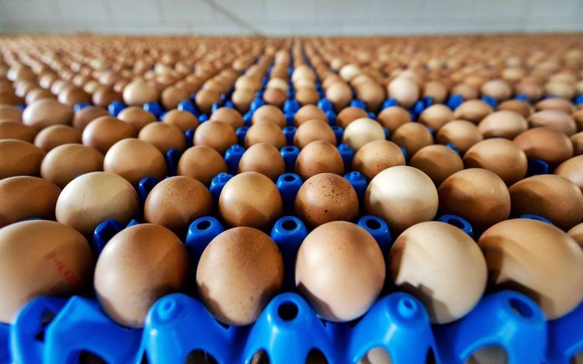 Uova contaminate: riunione Ue il 26/9