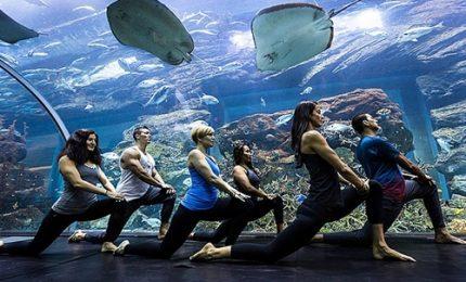 Una sessione di yoga tra i pesci nell'acquario di Dubai