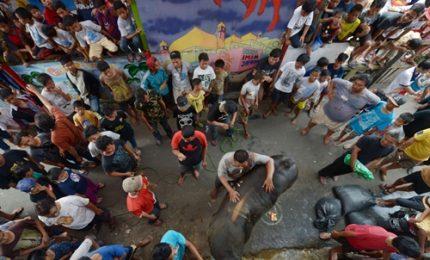 In Indonesia festa del sacrificio, sgozzati animali