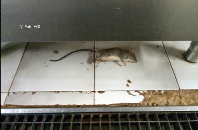 Topi morti (e non solo) nelle cucine dell'ospedale di Modica. Ministero invia i Nas