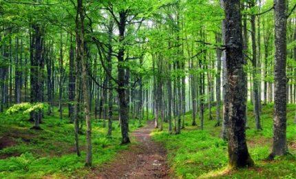 Clima, scienziato italiano scopre un algoritmo per difendere le foreste