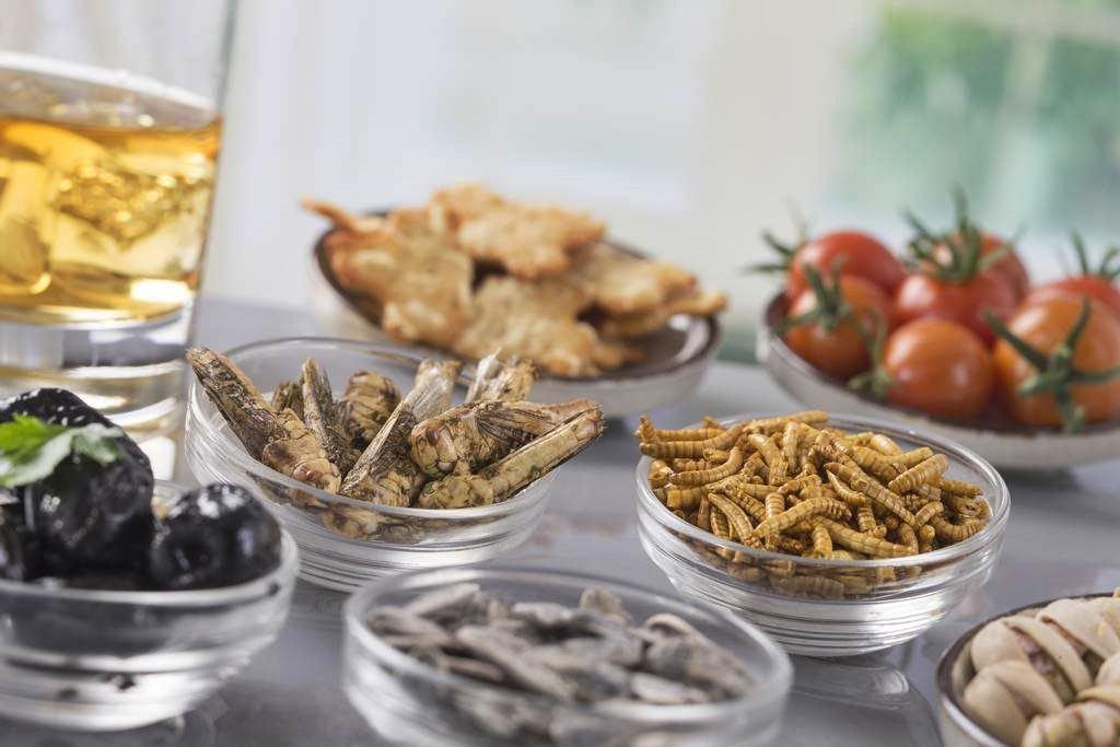 A tavola arrivano gli insetti, da gennaio in vigore nuove norme Ue sugli alimenti. Contrari metà degli italiani